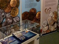 Roman hoards exhibition opens at Nantwich Museum