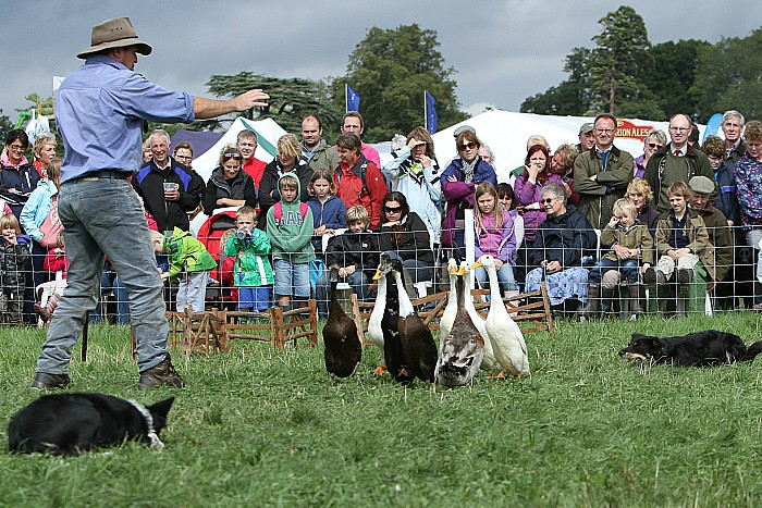 The dog and duck show - family festival at reaseheath college