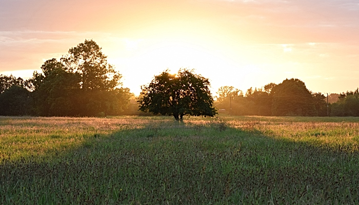 The tree casts a long shadow at sunset (1)