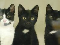Kittens found dumped in bin bag nursed by Nantwich RSPCA staff