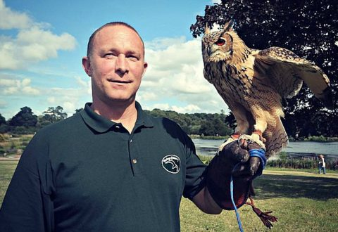 Heritage Falconry birds to star at Nantwich open days