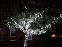 Tree of Light in Nantwich illuminated in moving ceremony