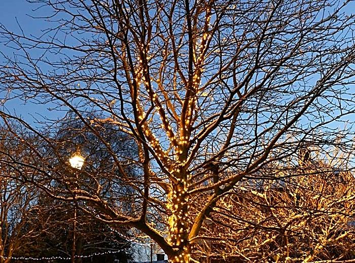 Tree of Light plans Nantwich