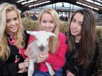 Thousands to flock to Reaseheath College lambing weekends