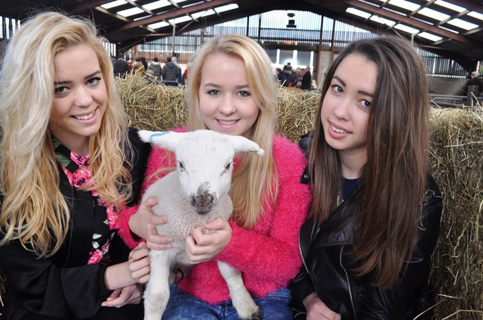Lambing weekend - twins Jessica and Emily Snape 14 yrs and Grace Copestacke 13 from madeley