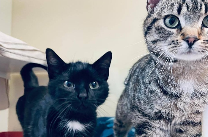Two cats dumped at side of road - ross and chandler