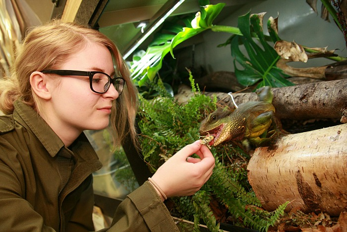 exotic animal warning - Victoria Copson BSC ABW grad with water dragon