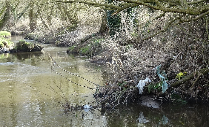 Waste trapped further downstream at Wistaston Brook (1)