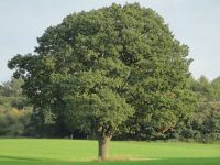 Combermere Abbey pledges ancient oak to help rebuild Notre Dame
