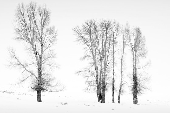 Winter Sentinels by Andrew Charlesworth CPAGB - Nantwich Camera Club