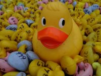 Wistaston Duck Race and Model Boat Race takes place September 9