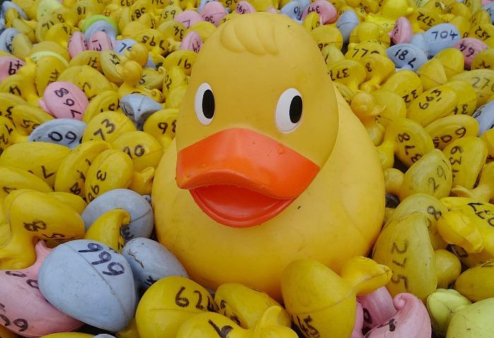 Wistaston Duck Race - promotional photo
