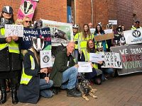 Councillors to back badger vaccinations in bid stop culling