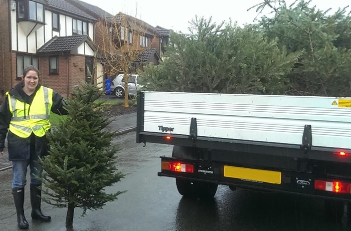 Xmas tree collection 1