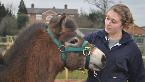 Nantwich students work with BBC presenter's rare breed ponies