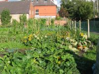 Council deal paves way for Stapeley gardeners to apply for allotments