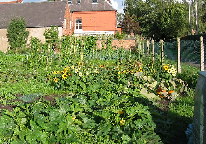 therapy garden - brookfield allotment - pic by Espresso Addict, creative commons