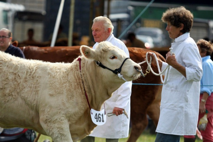 cattle at a South Cheshire agriculture show. Area to become new Food Enterprise Zone