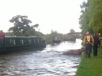 Fire crews and RSPCA rescue cow stranded in Nantwich canal