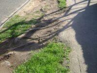 READER'S LETTER:  Restore damaged grass verges in Crewe
