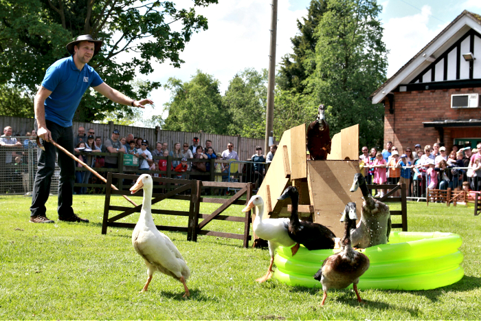 dog and duck show (1)