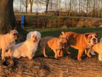 """Nantwich dog businesses team up to launch """"Family Paw Club"""""""