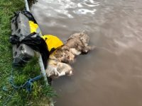 WARNING DISTRESSING IMAGES – Man guilty of stabbing dog and leaving her to drown in Nantwich canal