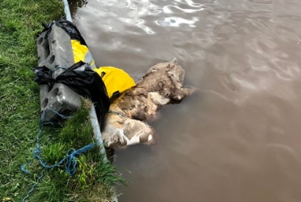 dog found dead in canal