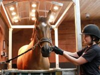 Reaseheath College and Rookery Equine launch new training course
