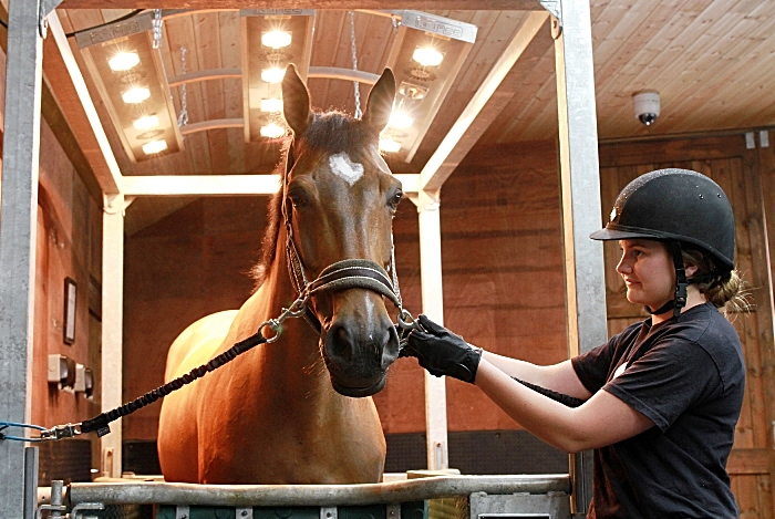rookery equine centre reaseheath