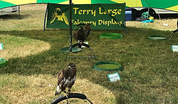 falcon displays at Nantwich Show