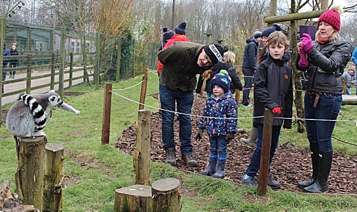 lambing - families enjoy lemur walk (1)