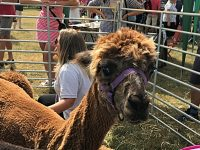 Thousands enjoy sun-soaked Nantwich Show at Dorfold Park