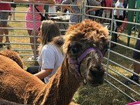 Thousands enjoy sun-soaked Nantwich Show at Dorfold Park