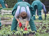 FEATURE: Top 5 benefits of building a garden
