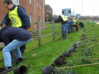 Rotary Club members plant hedge along Waterlode in Nantwich