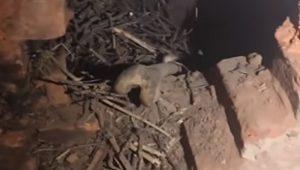 human bone in cottage - hoax