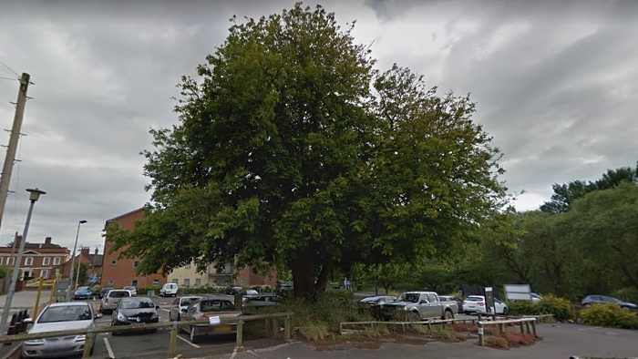 iconic tree in bowers row car park