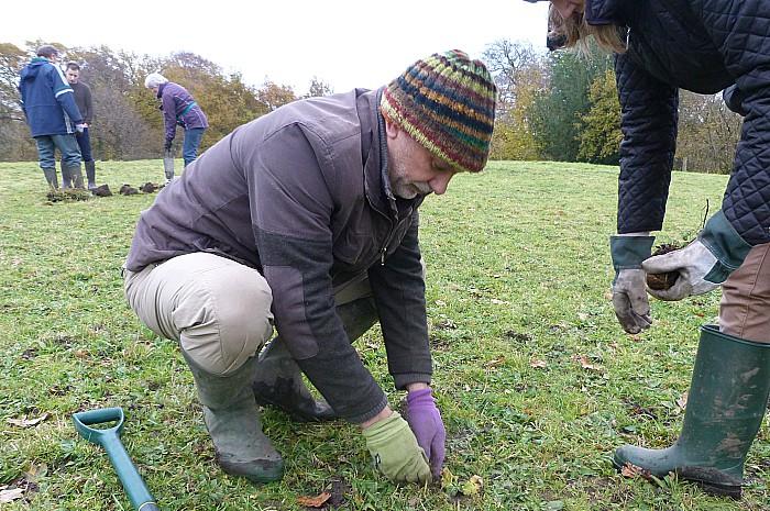 meadows, plug planting
