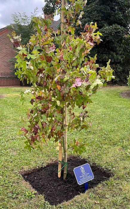 memorial tree for maurice jones