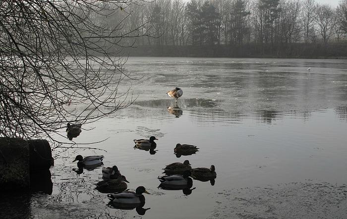 nantwich lake, pic courtesy of Jeff Stubbs