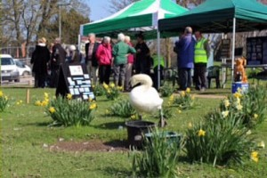 nantwich lake swan sculpture and sign unveiling