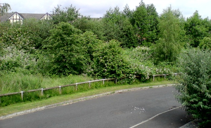 Overgrown land on Saltmeadows, Nantwich