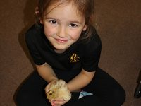 Stapeley pupils welcome arrival of 12 chicks