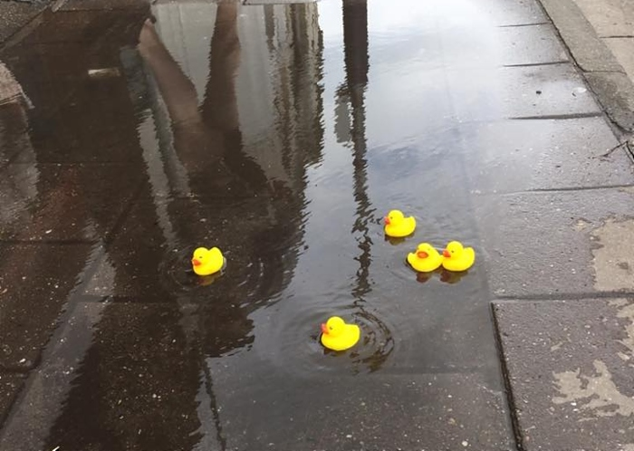 plastic ducks in beam street puddles