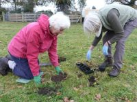 Cheshire Wildlife Trust creates new meadows after fund-raising appeal