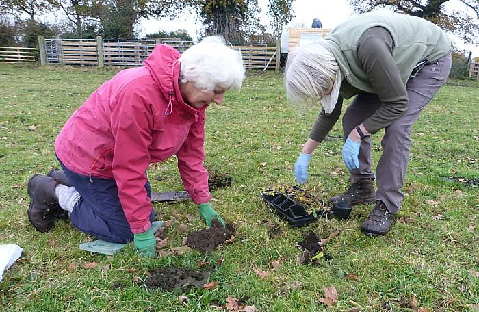 plug planting meadows