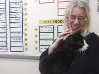 Missing cat reunited with owner five years later in Nantwich