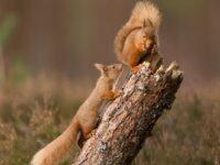 """Cheshire Wildlife Trust backs """"Big Wild Walk"""" for nature"""