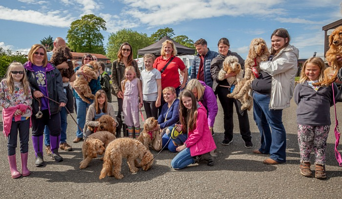 redshift doggy day out nantwich
